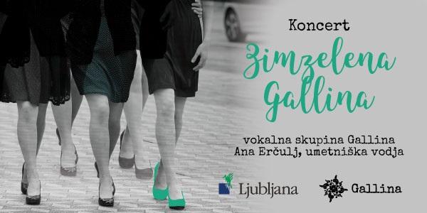 Plakat, Zimzelena Gallina